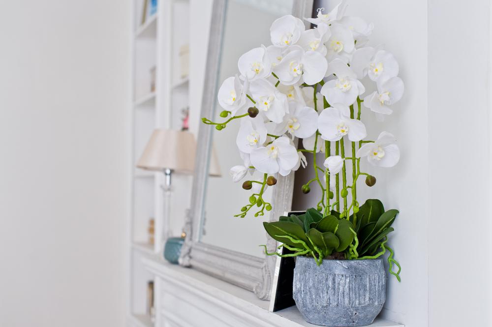 Jakie Kwiaty I Rosliny Wybrac Do Sypialni Artykuly Dommania